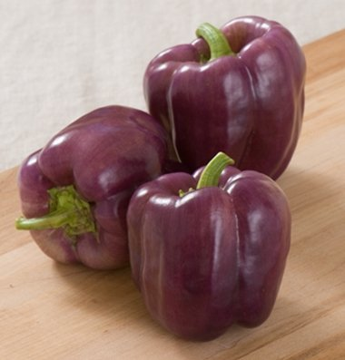 David's Garden Seeds Pepper Bell Islander D591 (Purple) 25 Hybrid Seeds