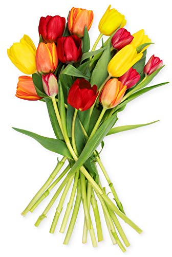 Benchmark Bouquets Multi-Colored Tulips (Vase not Included) - Fresh Flowers - Overnight Shipping and Delivery - Farm Fresh Tulips, Flower Bouquet, Flower Arrangements, Home Décor