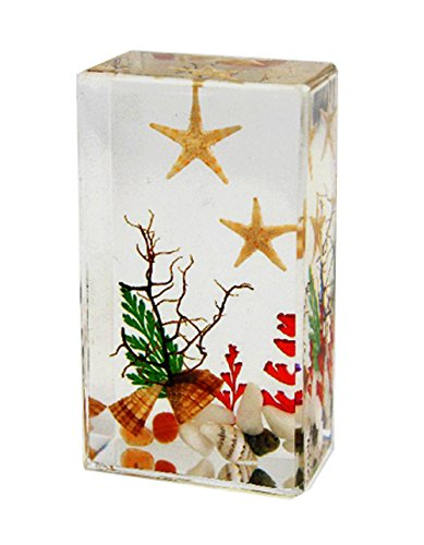 - WeGlow International WGI Real Starfish, Seashells and Underwater Plant Life Paperweight