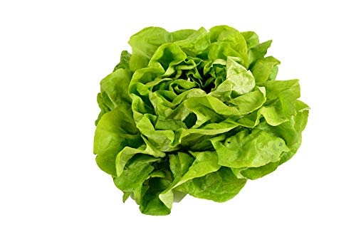 (500 Buttercrunch Lettuce Seeds - Butterhead, Boston, Bibb - by RDR Seeds)