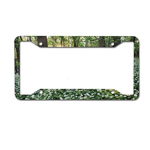 PoppyAnthony Wild Garlic Flowers in Forest at Sunset Novelty License Plate Frame Aluminum License Plate Slim 4 Holes and Screws for US Canada
