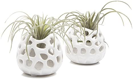 Chive – Set of 2 Planet Moon, 2.5 Small Round White Ceramic Air Plant Container, Tillandsia Bromeliad Display, Terrarium Container, Airplant Holder for Indoor Garden, Office Desk, Home Decor, Bulk