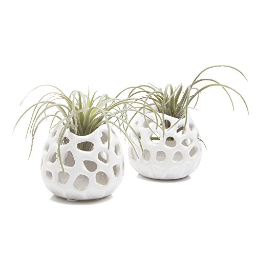 Chive - Planet Moon, 2.5'' Small Round White Ceramic Air Plant Container, Tillandsia/Bromeliad Display, Terrarium Container, Airplant Holder for Indoor Garden, Office Desk, Home Decor, Bulk Set of 2 by Chive