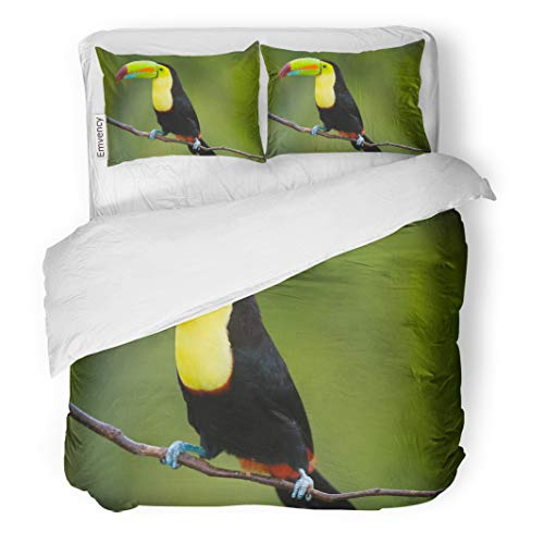Semtomn Decor Duvet Cover Set Twin Size Green Rica Keel Billed Toucan from Central America Blue 3 Piece Brushed Microfiber Fabric Print Bedding Set Cover]()