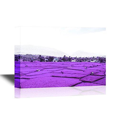 Landscape Purple Lavender Field