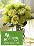 Green America Roses One Dozen