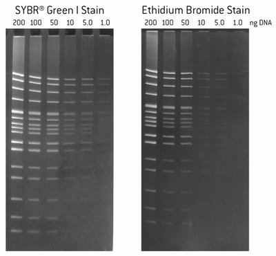 - 50512 - SYBRï¾ Green I - SYBR Green Nucleic Acid Gel Stains, Lonza - Each