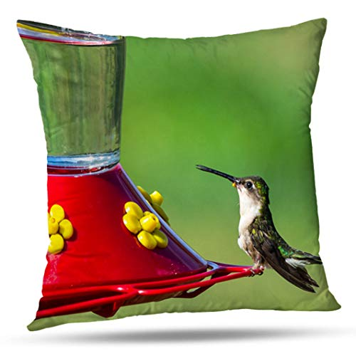 Feeder Gold Hummingbird (Alricc Drink Hanging Red Bird with Seed Animal Beautiful Colorful Eating Decorative Throw Pillows Cushion Cover for Bedroom Sofa Living Room 18X18 Inches)