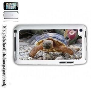Desert Tortoise Turtle Photo iPOD 4 Touch Hard Case Cover Shell White 4th Generation White Kimberly Kurzendoerfer