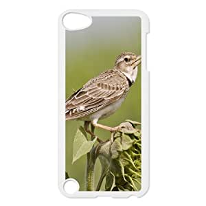 iPod Touch 5 Phone Case Lark MB15854