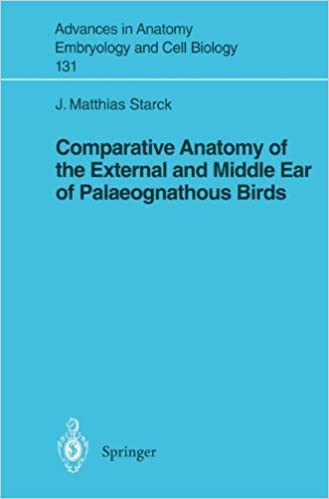 Amazon Comparative Anatomy Of The External And Middle Ear Of