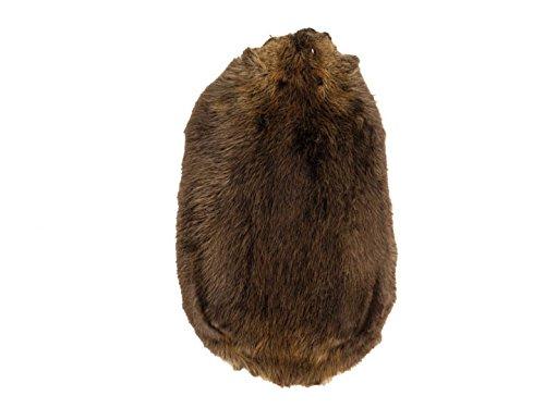 Chichester Inc #1 Grade Beaver Skin (Large (25-30