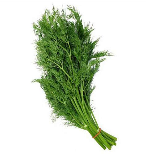 Seeds Dill Bouquet Seeds Aromatic Fragrant Get 250 Seeds #TEK01YN