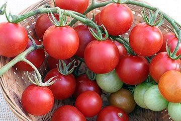 1000 Seeds of Sweet Chelsea VFNT Hybrid - Tomatoes Fruited