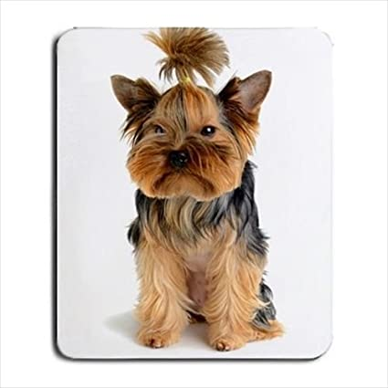 Amazon Com Cute Funny Yorkshire Terrier Yorkie Puppy Dog Mousepad