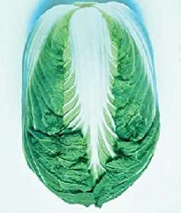 Cabbage Chinese Blues 250 seeds