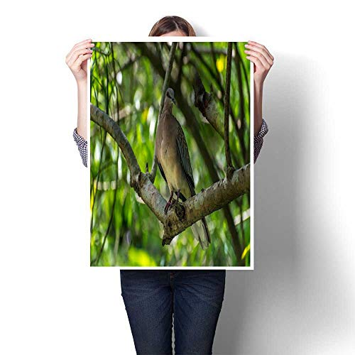 homehot Wall hangings Singing Bird in a Branch Against Morning Sunlight Cute Bird tit Sitting on Tree Branch in Spring Garden Decorative Fine Art Canvas Print Poster K 16