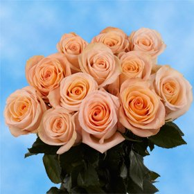 GlobalRose 1 Dozen Peach Roses - Wonderfully Adorable!
