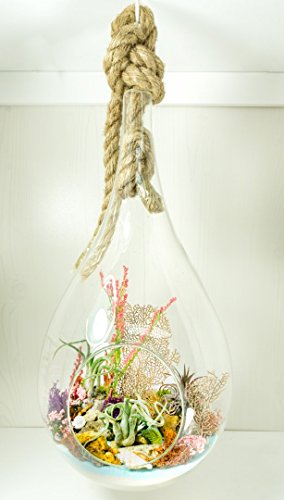 "Air Plant Terrarium Kit | Ocean Series Deep Sea Garden | Complete Tillandsia Gift Set | 14"" Teardrop/Pear Shaped Glass Planter with 24"