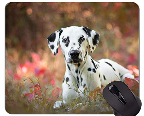 Natural Rubber Gaming Mouse Pad Printed with Pet Dalmatian Dog - Stitched Edges