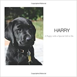 Harry - A Puppy with a Special Job to Do: A photo guide to raising a guide dog puppy