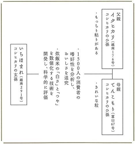 お米の専門店 スズノブ千葉店 【精米】 福井県産 いちほまれ 令和1年度産 (白米 5kg)