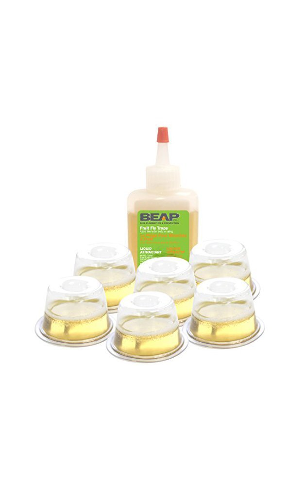 BEAPCO Fruit Fly Traps, Non Toxic Indoor Live Catcher/Killer, 6-Pack