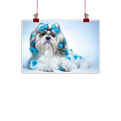 - Simple Life Minimalist Dog Lover Decor,Shih tzu Dog with Surlers Grooming Hairstyle Salon Front View Closeup Studio Shot 20