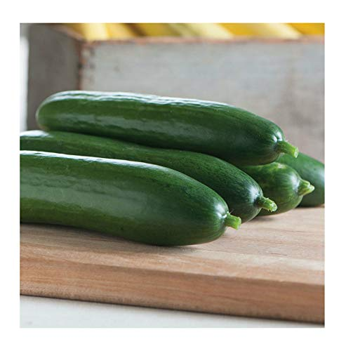 Diva Hybrid Cucumber Non-GMO Vegetable Seeds Annual 100 pcs - Diva Hybrid