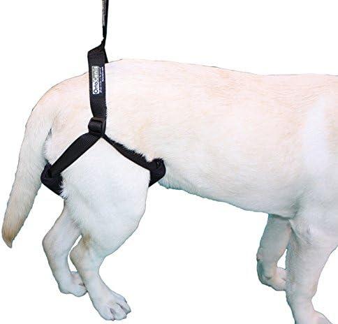 Ortocanis Arnés de Soporte para Perro: Amazon.es: Productos para ...