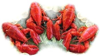 4 Live Maine Lobsters, 1.25 lbs. A Piece by Charleston Seafood