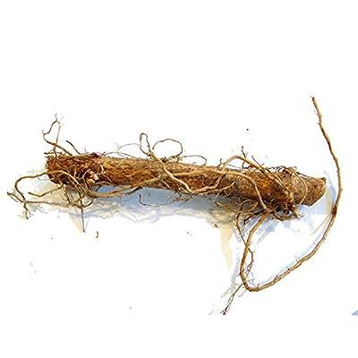 Cascade Hops Rhizome Wholesale 100 ct. : Garden & Outdoor