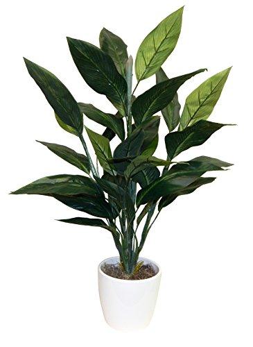 (Ella and Lulu Bird of Paradise Foliage Floor Plant Greenery 36-in Green)