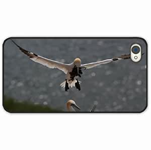 iPhone 4 4S Black Hardshell Case gull nest algae Black Desin Images Protector Back Cover