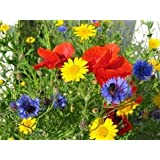 Wildflower Seed Mix, 16 Ounces of Seed (1 Pound), Great for Colorful Border Gardens, USA Product. Jacobs Ladder Brand