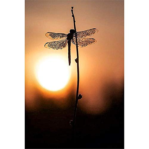 - Paint-by-Number Kits for Adults - Nightfall Dragonfly - Includes Brushes, Paints and Numbered Canvas - 16x20 Inch - Great for Kids and Adults,Without Frame