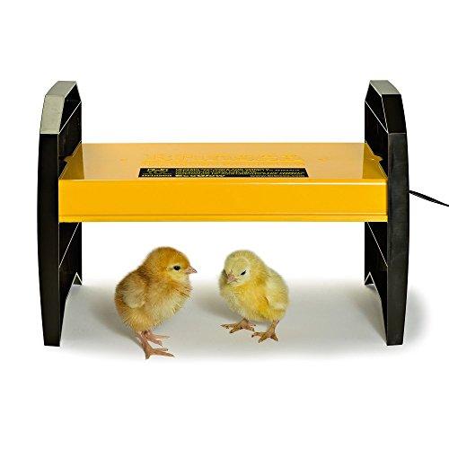 Hatch & Raise Chicks