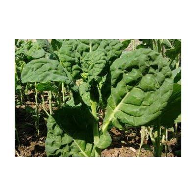 saag khanyari Seeds (avg 30-50) Seeds 2 : Garden & Outdoor