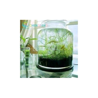 Shopvise 100 Pcs A Bag Aquarium Grass Water Grasses Random Aquatic Seeds Tank Grass Indoor Beautifying Seed DIY Home: Clear : Garden & Outdoor