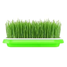 Seed Sprout Tray Soil-Free Food Grad PP Healthy Wheatgrass Grower Bean Sprout Tray 9.84x13.4x1.77inch