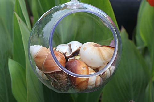 Hanging Seashell Terrarium Assorted Seashells Decor