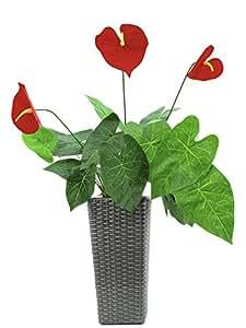 Flor/anturio 3blüten 51bl. 71cm, Planta Artificial