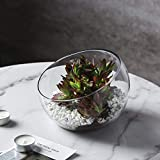 Whole Housewares Glass Slant Cut Bowl, Glass