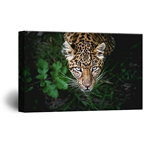 A Leopard from Black Wild Background Gallery