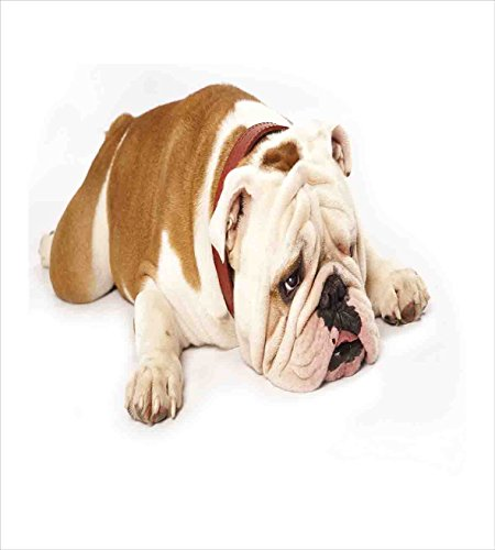 Ambesonne English Bulldog Duvet Cover Set, Sad and Tired Bulldog Laying Down European Pure Breed Animal Photography, Decorative 3 Piece Bedding Set with 2 Pillow Shams, King Size, Brown Cream 2