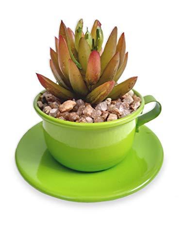Mini Xícara Verde De Suculenta Arranjo Flor Artificial