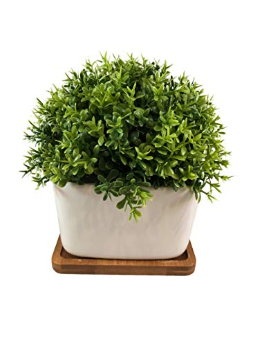 Peach Tree Farm Fake Plant for Bathroom/Home Decor, Small Artificial Faux Greenery for House Decorations (Potted Plants) (Clover with Tray) (Magnolia Gaines)