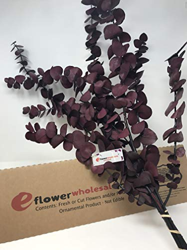 eflowerwholesale Fresh Preserved Eucalyptus Red Tone (Preserved Plants)