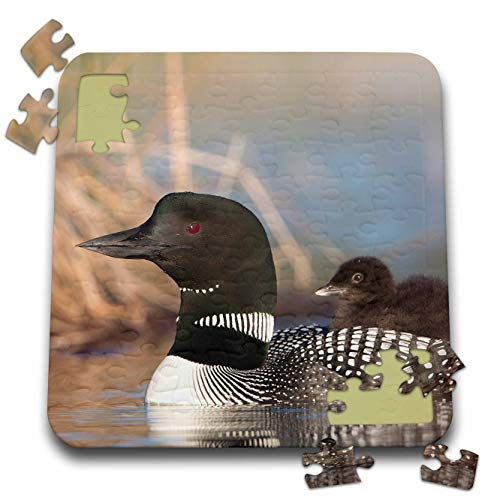 3dRose Danita Delimont - Birds - Canada, British Columbia. Adult Common Loon with a Chick on its Back. - 10x10 Inch Puzzle (pzl_313026_2)