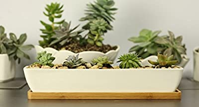 Wish you have a nice day Set of 2 Modern White Ceramic Succulent Planter Pots/Mini Flower Plant Containers with Bamboo Saucers